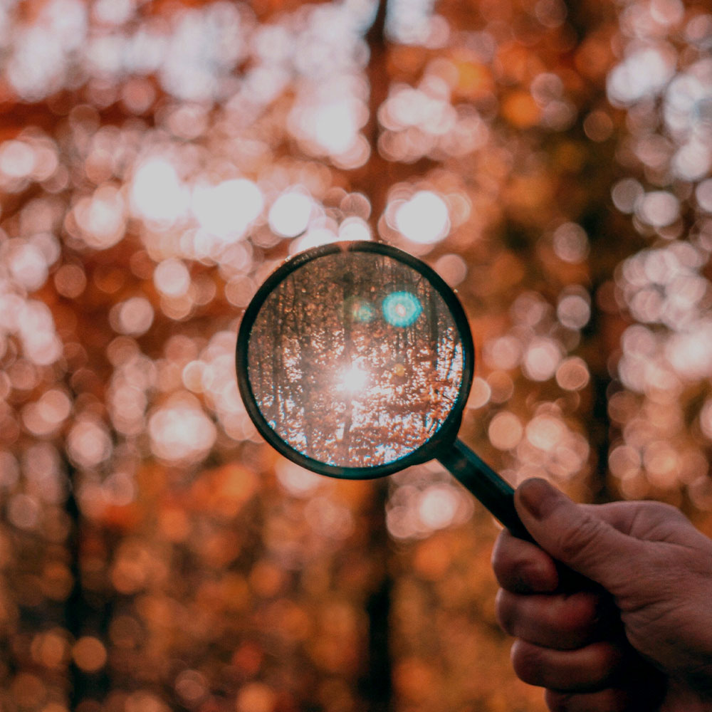 Magnifying glass being held up to a forest